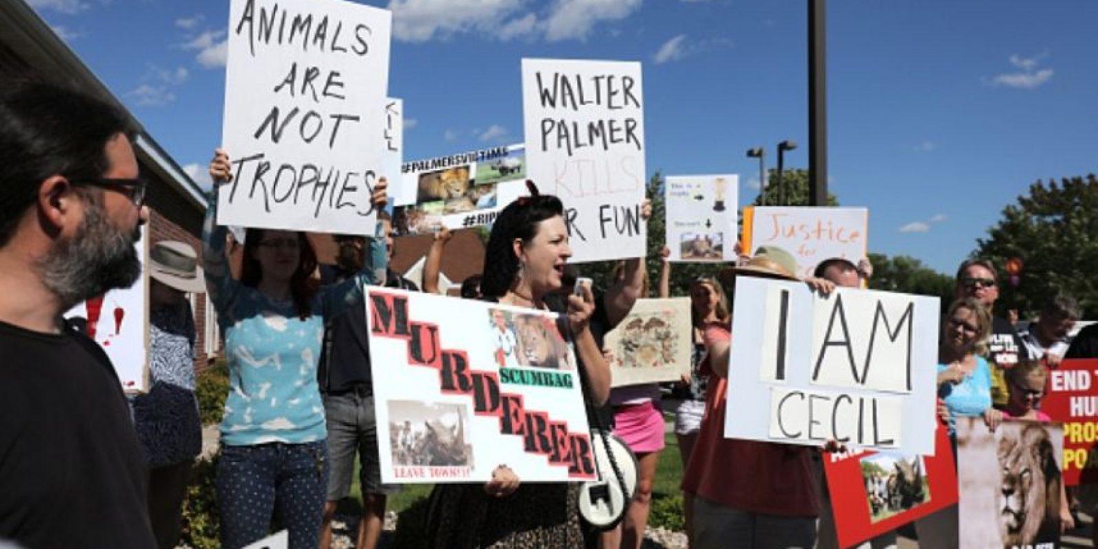 Aunque un cazador profesional y el propietario de una granja han sido arrestados por la muerte del león, Palmer no ha sido acusado. Foto:Getty Images
