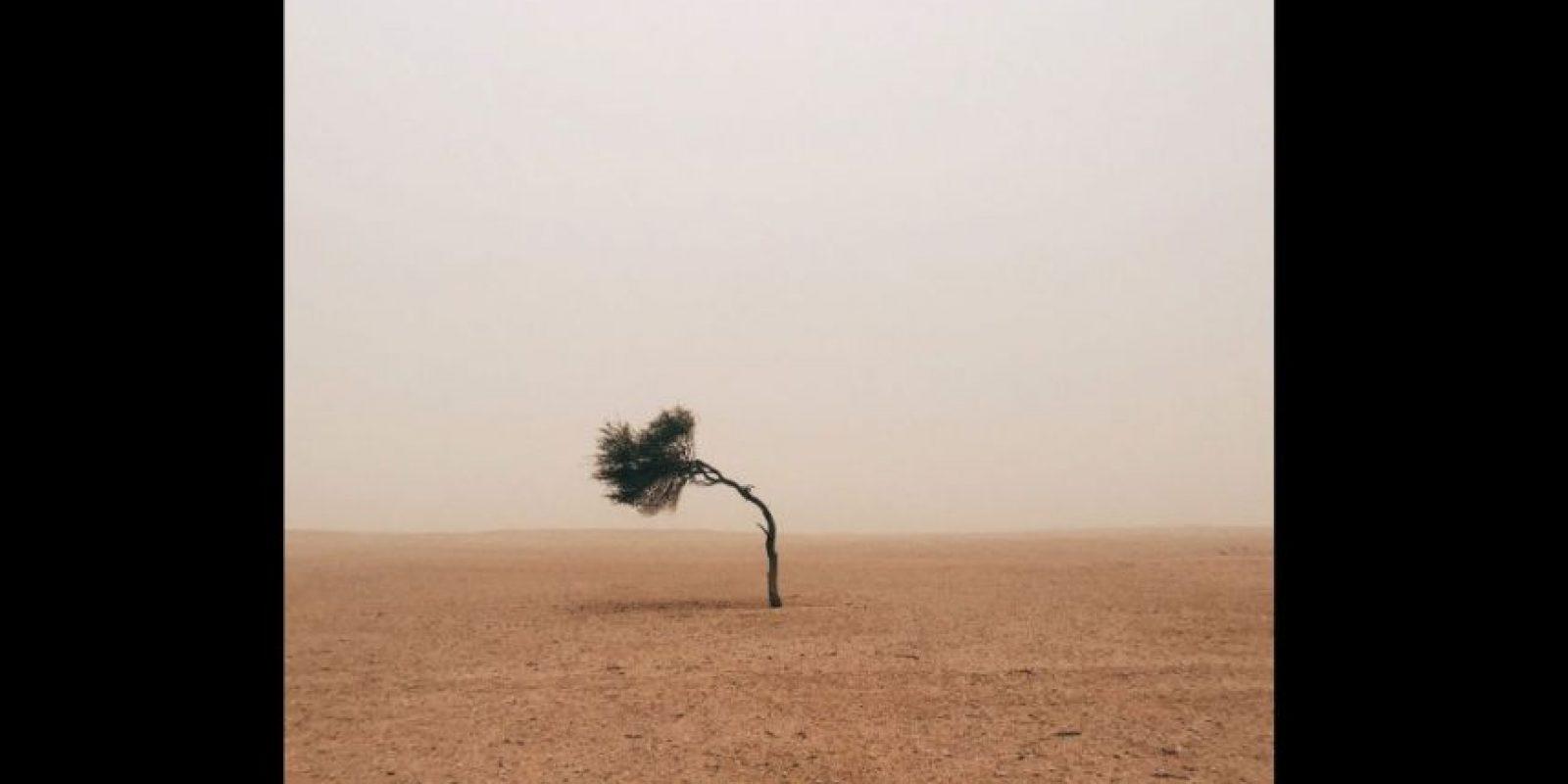 Primer lugar en la categoría Árboles Foto:Ruairidh McGlynn