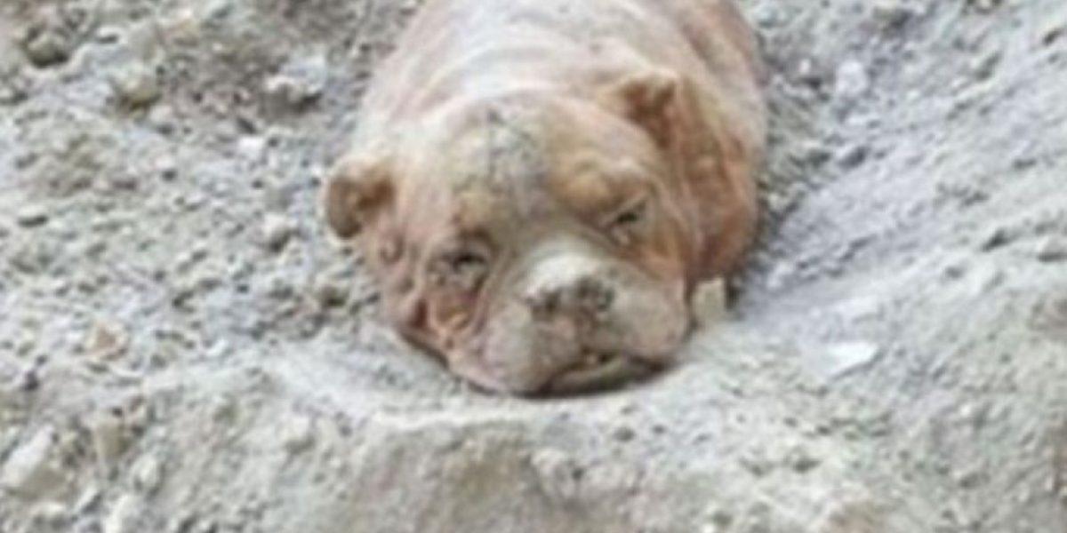 Video: El terrible sufrimiento de una tortuguita a la que le retiran plástico de la nariz