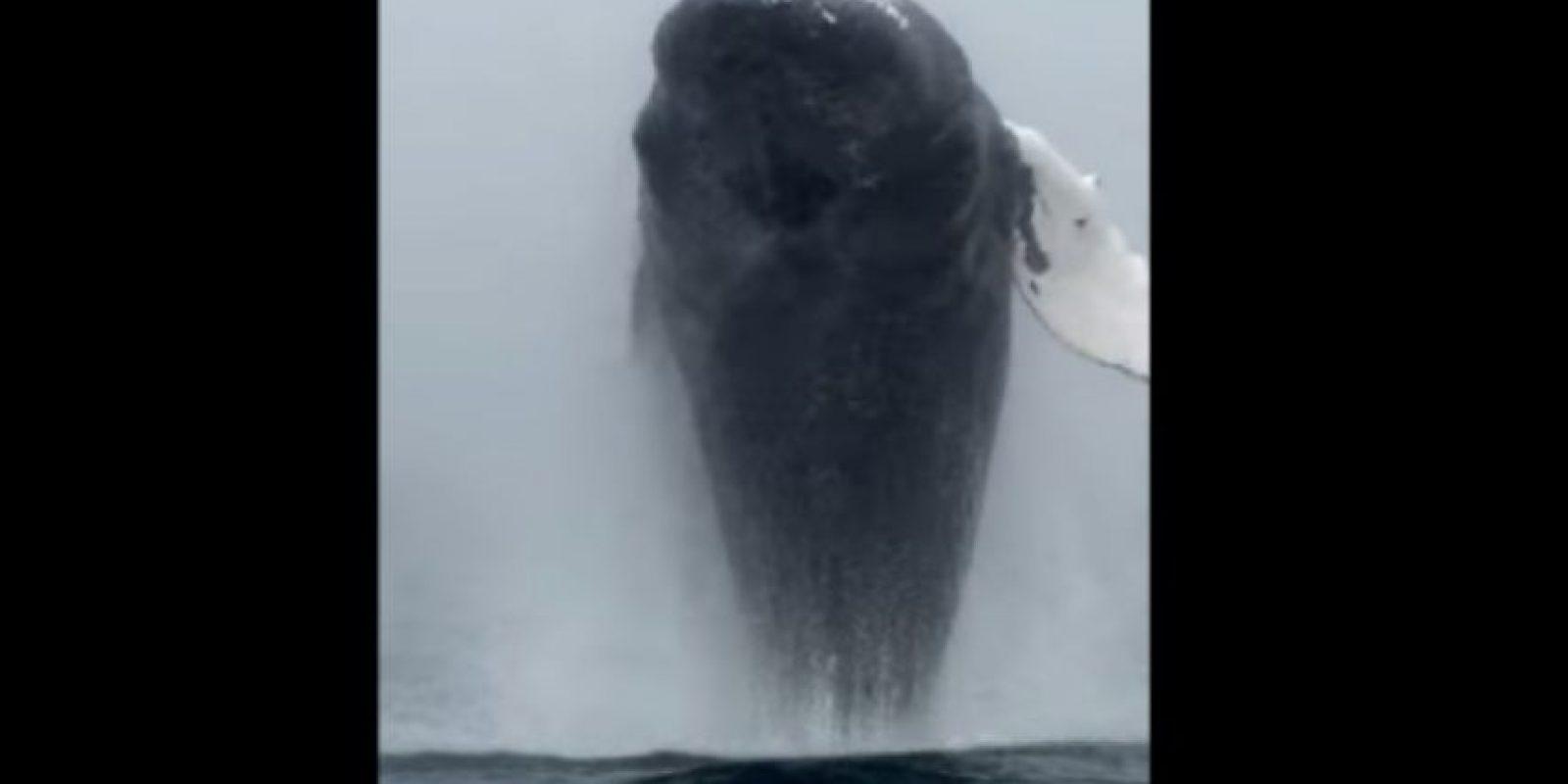 Esta ballena salió a saludar a los turistas. Foto:Vía Youtube
