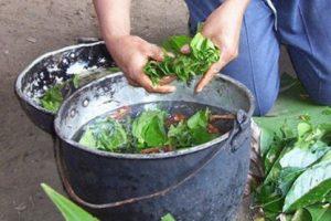 La ayahuasca es una popular bebida de los pueblos indígenas amazónicos. Suele provocar visiones y mareos. La ayahuasca puede combatir los problemas de depresión y esquizofrenia. Foto:Wikipedia