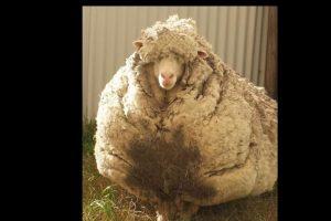 La Sociedad Real para la Prevención de la Crueldad contra Animales cree que el animal se perdió desde hace mucho tiempo. Foto:Vía Twitter @tvendange