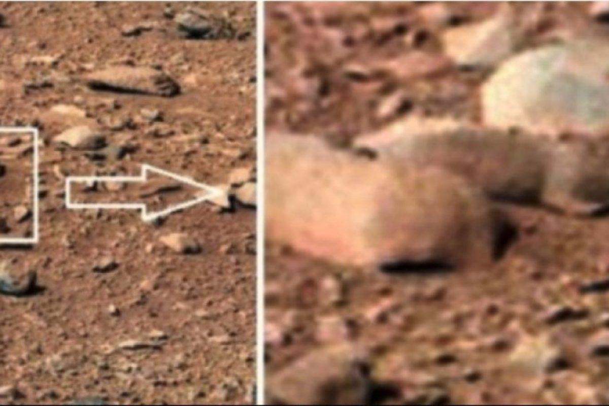 Una rata Foto:NASA