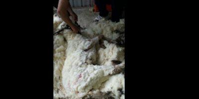 La sociedad protectora de animales tenían miedo de que sufriera un shock. Foto:Vía Twitter @tvendange