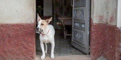 Policía rescata a  niño que era amamantado por un perro