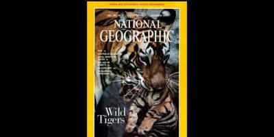 Diciembre 1997. La tigre Sita es fotografiada junto a su cachorro por fotógrafo Michael Nichols cuando la especie se encontraban en peligro de extinción. Foto:Vía nationalgeographic.com