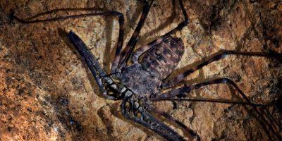 También se les ve en ámbitos nocturnos. Foto:vía bichos-v.blogspot.com