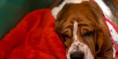 4. Evitar tocar a perros que no se conozcan Foto:Getty Images