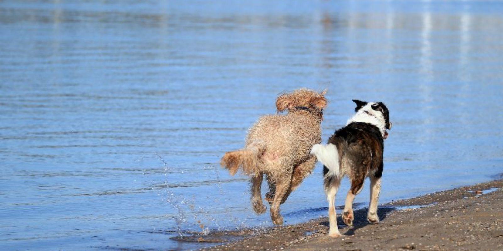 6. No jugar con un perro mientras este come. Foto:Getty Images