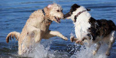 8. No acercarse a uno que alimente a sus cachorros. Foto:Getty Images