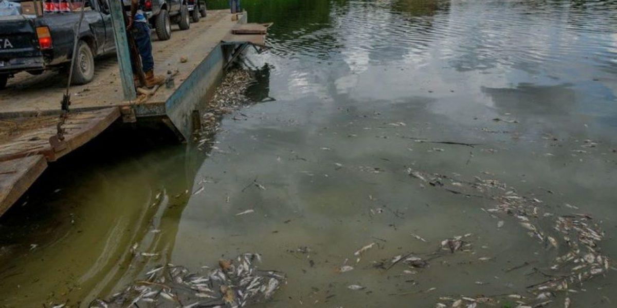 Repsa recibe sanción por posible contaminación en río La Pasión