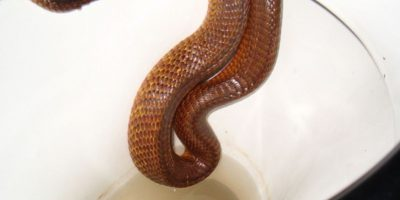 Más serpientes. Foto:vía Imgur