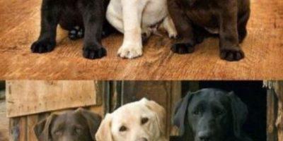 Video: Este perro