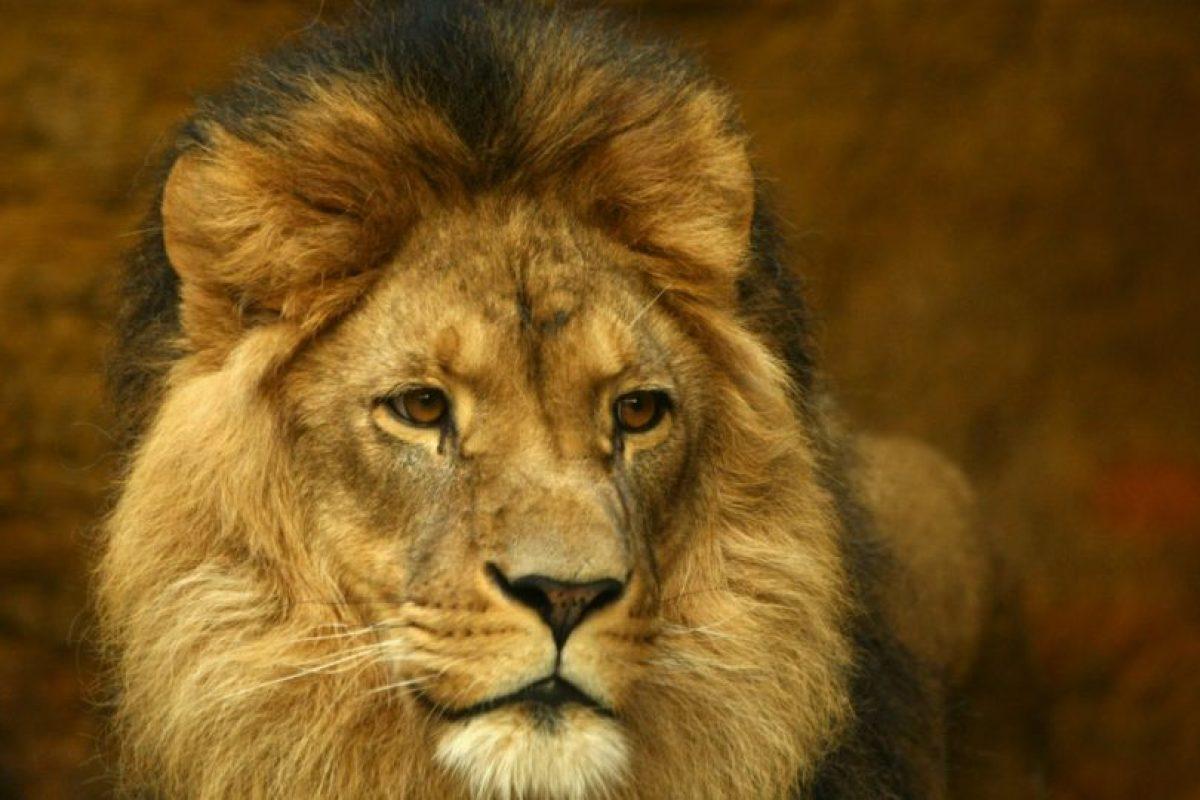 El defensa mexicano admite que su animal preferido es el león. Foto:Getty Images