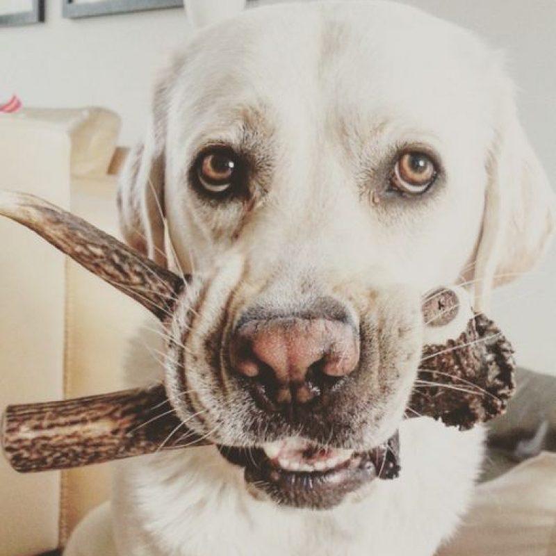 Al defensa mexicano también le encantan los perros, pero sus favoritos son los labradores blancos. Foto:Vía instagram.com/explore/tags/whitelabrador
