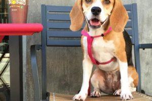 """""""Chicharito"""" es otro fanático de los perros. Foto:Vía instagram.com/explore/tags/doggy"""