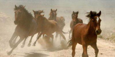 """""""La Mona"""" era aficionada a los caballos. Compró el más caro de la época, """"Lady Di"""". Foto:vía Getty Images"""
