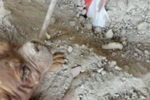 El mastín fue cubierto con piedras, cables y había sido amarrado a un saco de grava para evitar que se escapara. Gracias al olfato de la mascota de Dinis, el mastín pudo ser liberado. Foto:Vía Facebook.com/pedro.dinis.3994