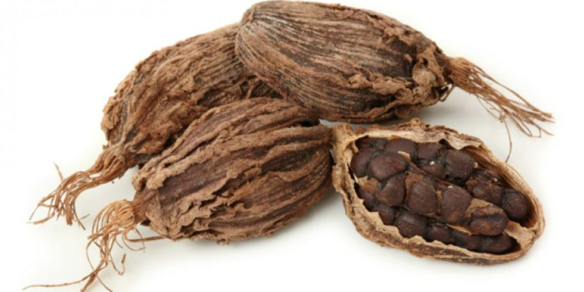 Productores de cacao de la región salen a la conquista de mercados gourmet
