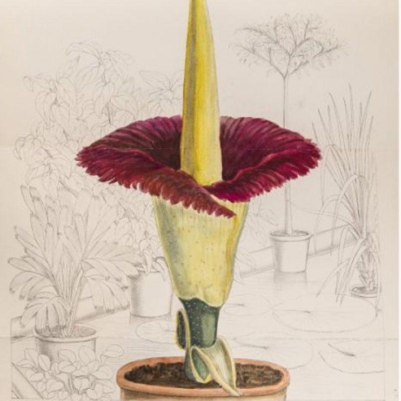 Florecita. Linda florecita. Foto:vía Jardín Botánico de Chicago