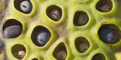 Según Geoff Cole y Arnold Wilkins, investigadores del Centro de Ciencias del Cerebro de la Universidad de Essex, las imágenes de animales venenosos, como el pulpo, causaban esta impresión. Foto:vía Imgur