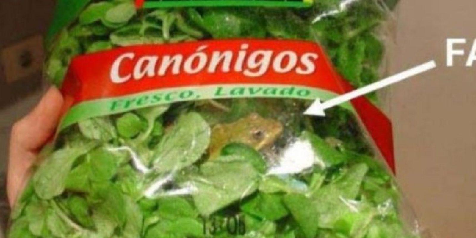 Y ranas vivas dentro de lechuga de canónigo Foto:Imgur
