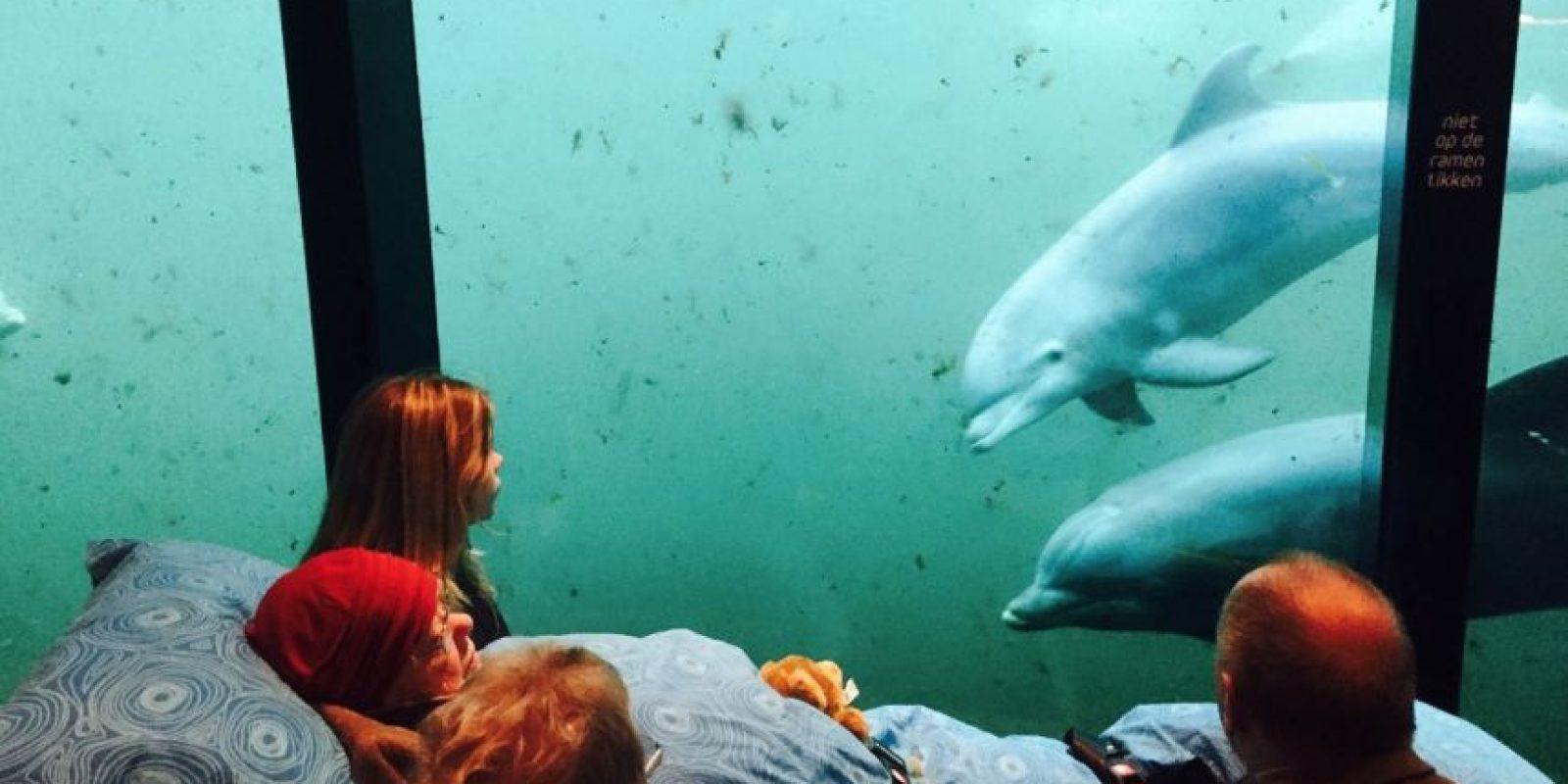 Visitar a los delfines Foto:Vía Facebook.com/wensenrijders