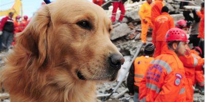¿Por qué no utilizan perros de rescate en la #TragediaElCambray?