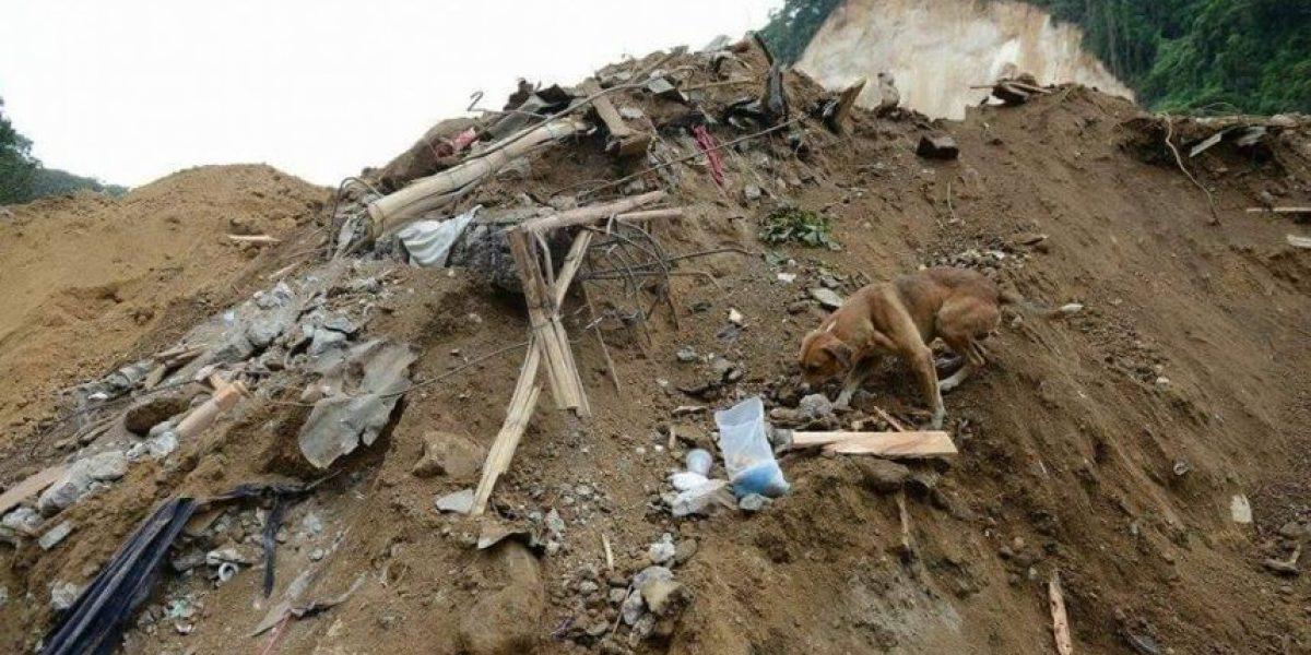 AMA buscará refugio temporal o permanente para las mascotas de las víctimas del derrumbe