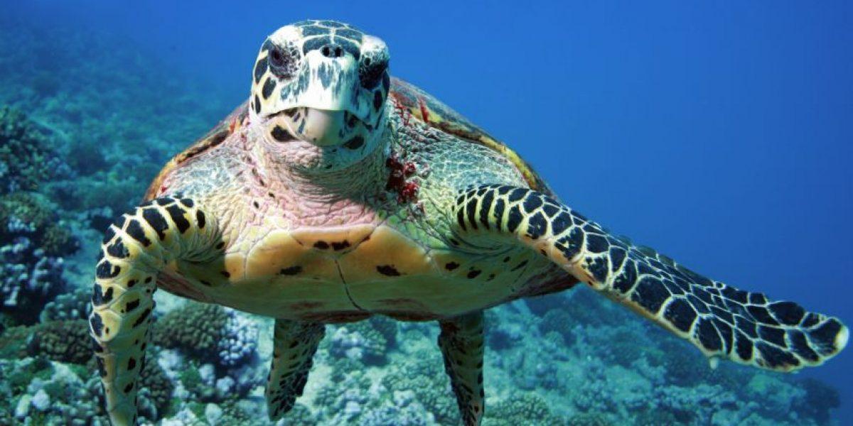 El cambio climático condiciona el sexo de las tortugas
