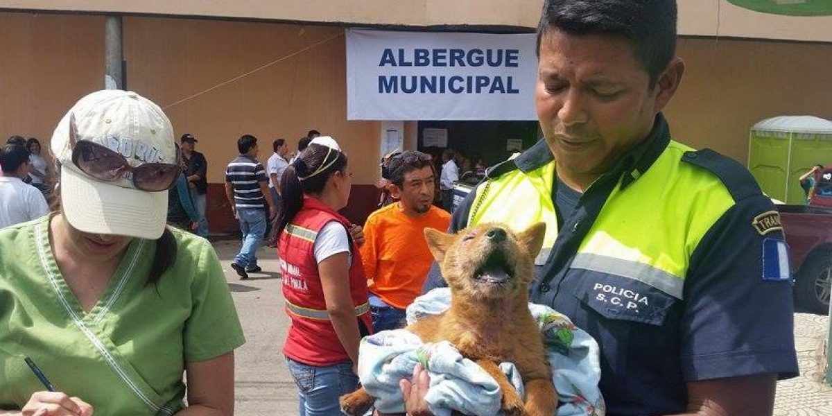 Este perrito fue rescatado y espera encontrar a sus dueños