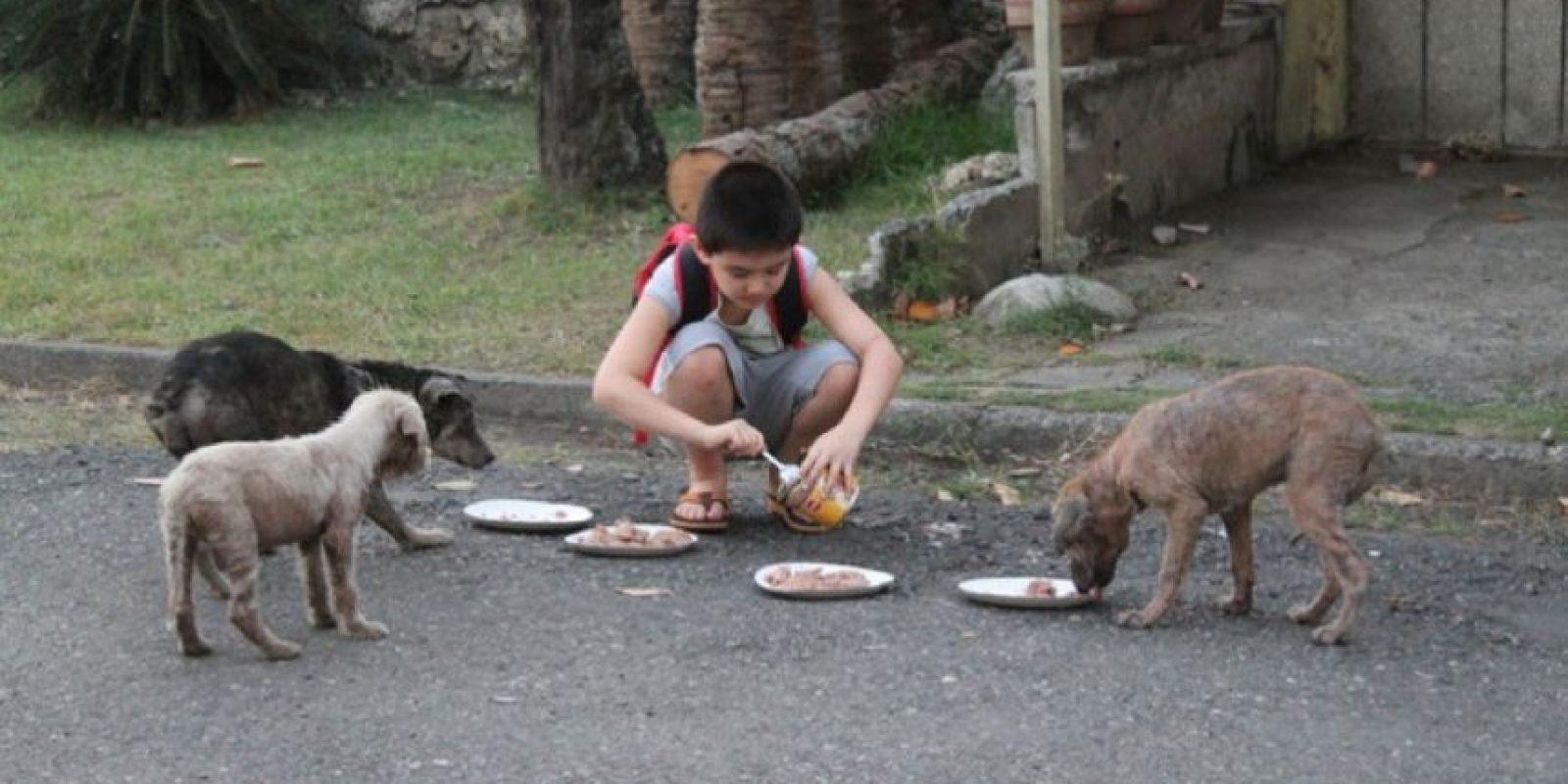 Este niño tiene un enorme corazón. Le da de comer a los perros sin hogar. Foto:Imgur