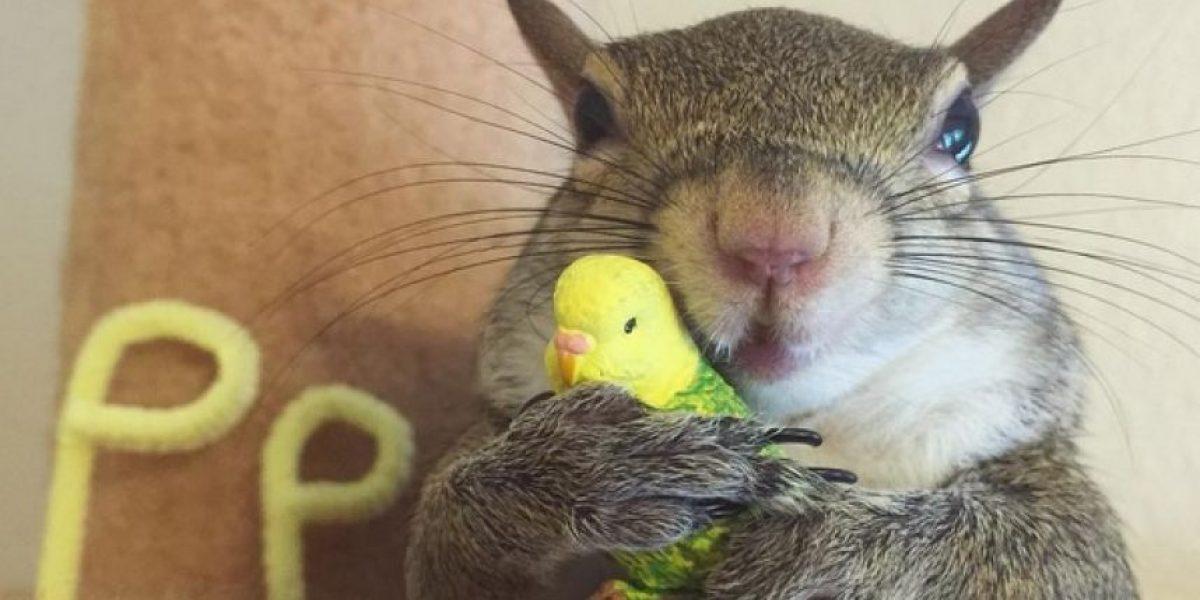 Ardilla rescatada se vuelve el miembro más adorable de esta familia
