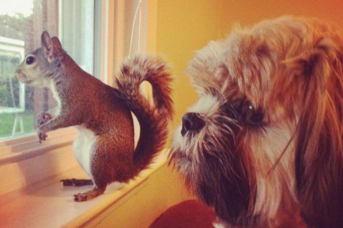 """La llaman """"Esta chica es una ardilla"""" Foto:Vía Instagram/this_girl_is_a_squirrel"""