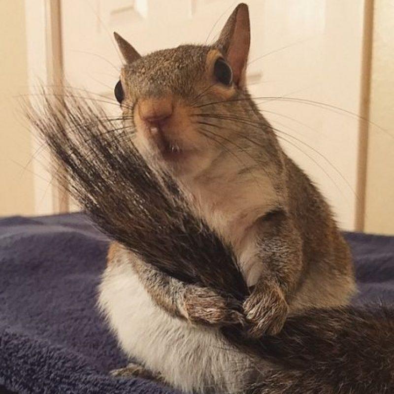 """Sus múltiples videos y fotos siempre obtienen cientos de """"me gusta"""". Foto:Vía Instagram/this_girl_is_a_squirrel"""