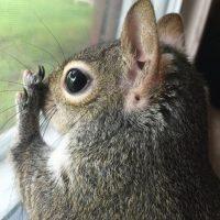 Foto:Vía Instagram/this_girl_is_a_squirrel