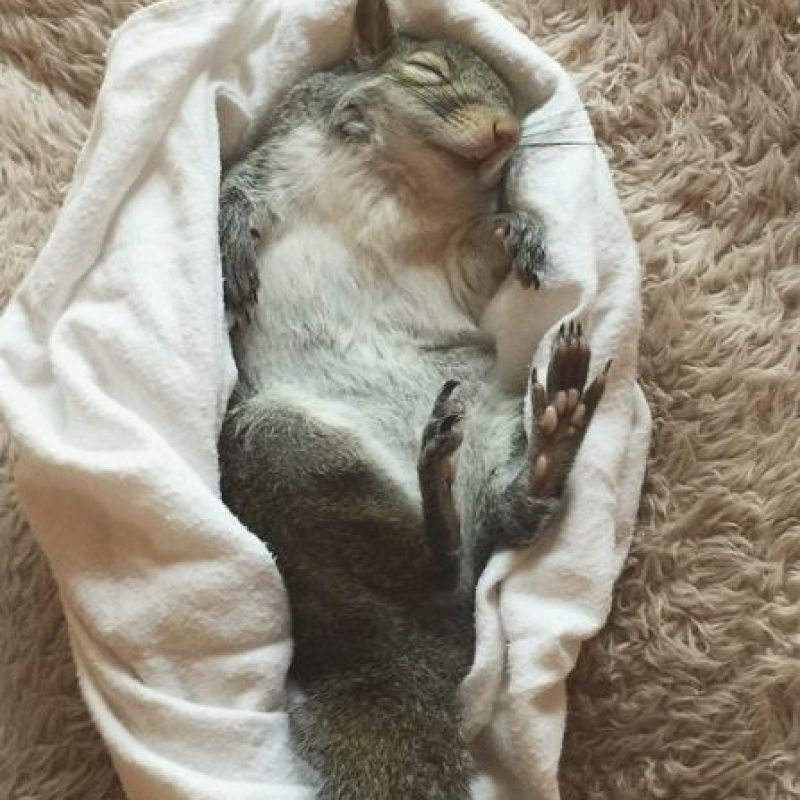 Foto: Vía Instagram/this_girl_is_a_squirrel