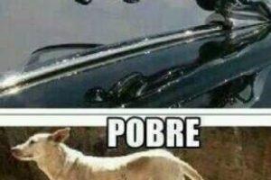 """""""Ptheven"""" es otro meme de un perro con una quijada hendida. Foto:vía Nacadas de la Vida Real"""