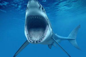 Después de una gran tormenta en dicha localidad, varias personas subieron a sus redes sociales imágenes que mostraban la inundación con unos tiburones en el fondo del agua. Foto:Tumblr
