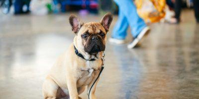 Tres perros extraviados en Pasos y Pedales: aún falta uno por encontrar a su familia