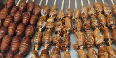 Video: 7 tutoriales para cocinar insectos y gusanos que los horrorizarán Hay poca información al respecto: se recomienda darles tratamiento térmico. Foto:vía Tumblr