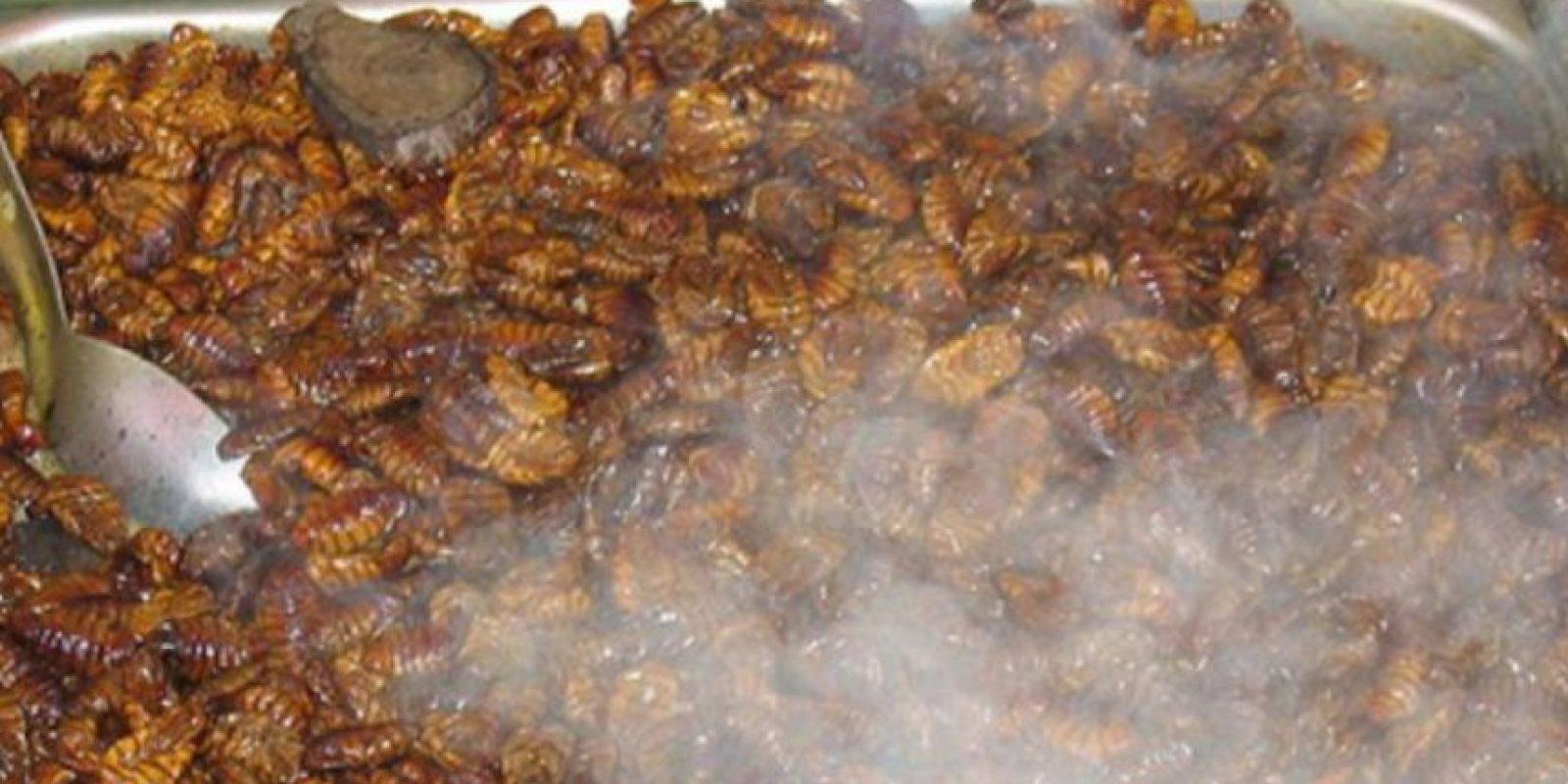 """Video: 7 tutoriales para cocinar insectos y gusanos que los horrorizarán """"La recolección de insectos y su crianza a nivel del hogar o la escala industrial puede ofrecer importantes oportunidades de subsistencia para las personas, tanto en países en desarrollo como en países desarrollados"""", indicó el estudio. Foto:vía Tumblr"""
