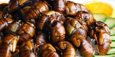 Los escarabajos son los más apetecidos a la hora de comer insectos. Foto:vía Tumblr