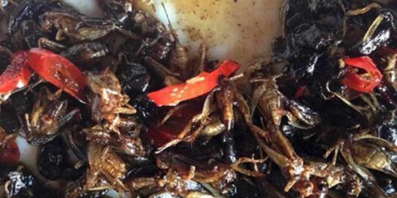 Se estima que los insectos forman parte de la dieta tradicional de al menos 2.000 millones de personas en el mundo, según el informe de la FAO. Foto:vía Tumblr
