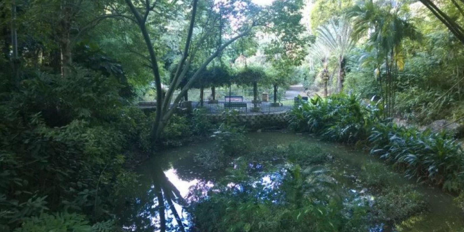 Jardín Botánico de Río Piedras Foto:Vía Facebook.com/Jardin-Botanico-de-Rio-Piedras