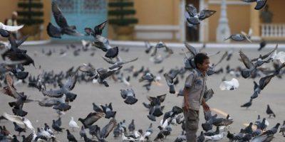 """También Irán capturó palomas """"espías"""" en 2008, en una planta nuclear. Foto:Getty Images"""