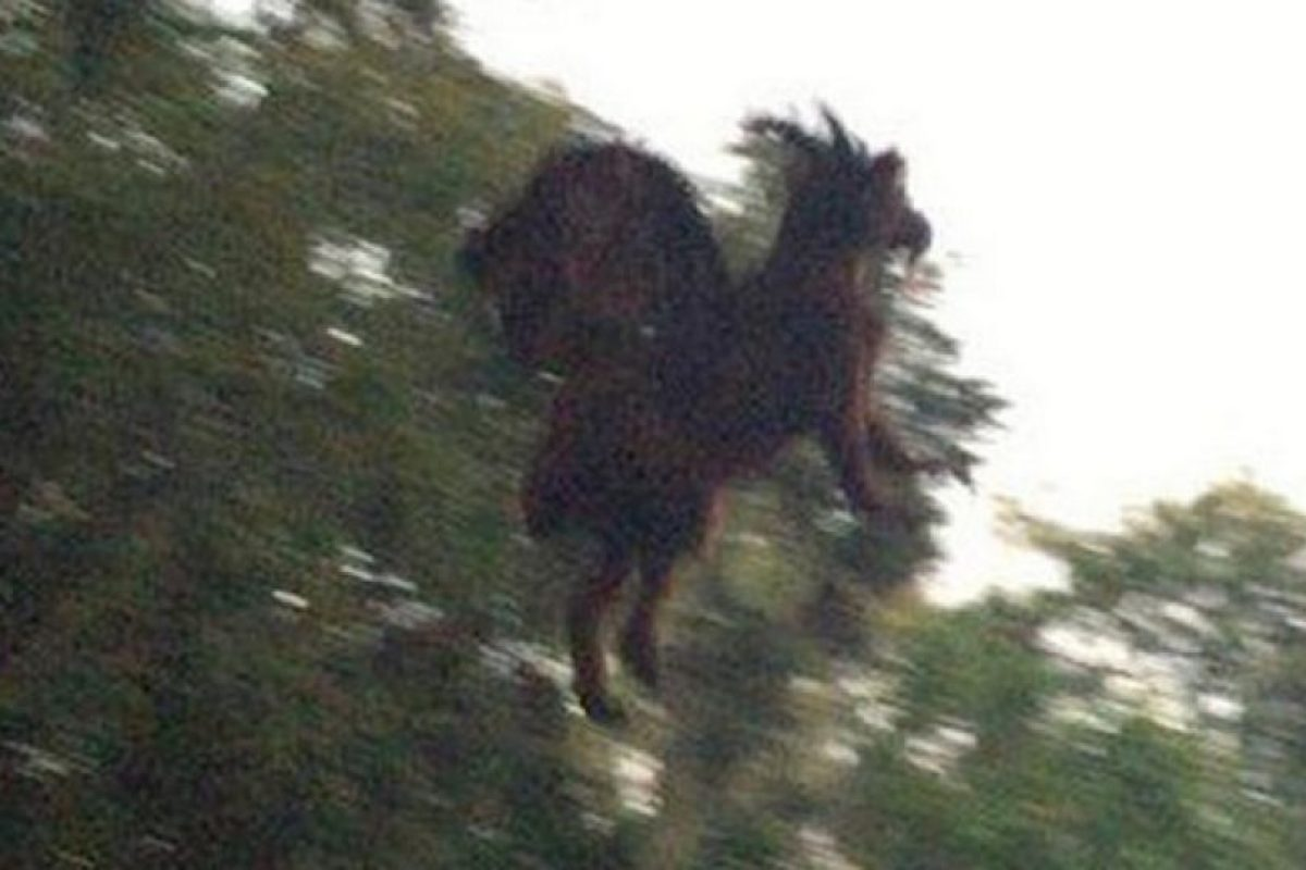 2. Afirman haber visto una figura diabólica en Nueva Jersey Foto:Vía Twitter