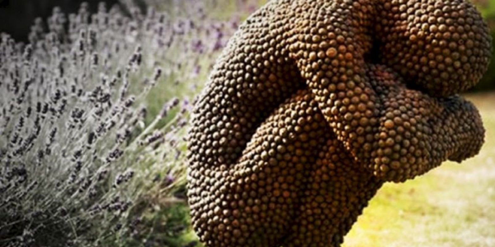 Se relaciona con el miedo a los parásitos. Foto:vía Tripofobia.com