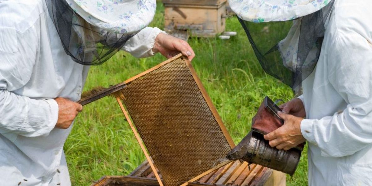 Apicultores afinan sus técnicas para el combate a la mosca del mediterráneo