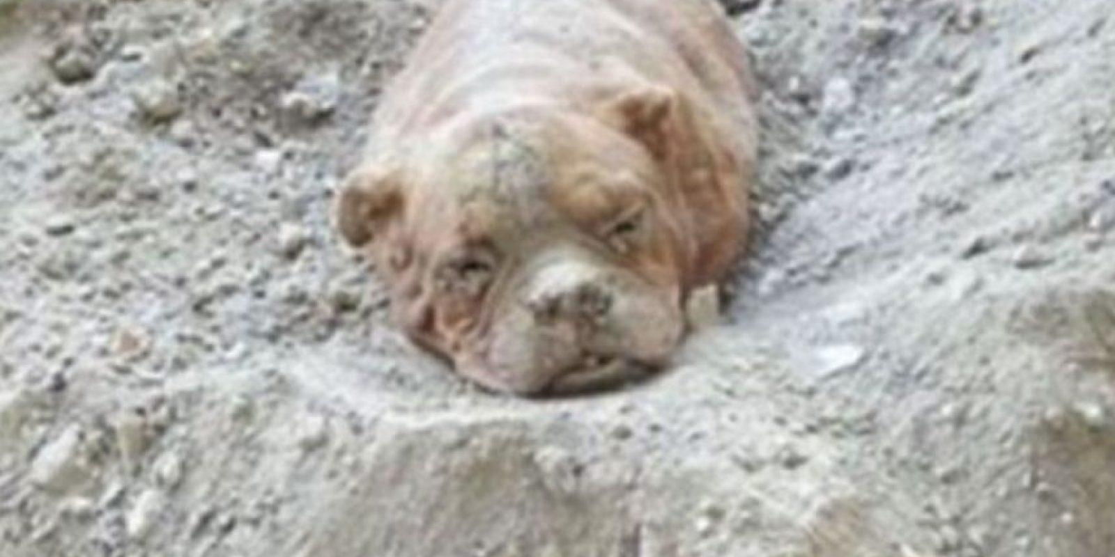 Esta perra fue enterrada viva por su dueño en Francia. Foto:vía Facebook/Pedro Dinis